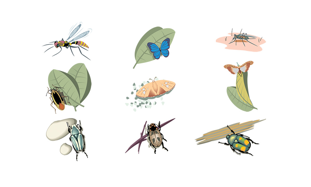 Adobe Insects